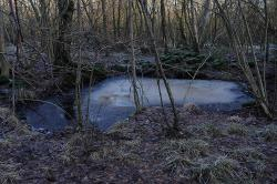 frozen-pond-9961-a